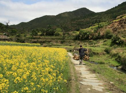 Path through the fields, Beijing Hikers Wuyuan Trip, Jiangxi Prov.