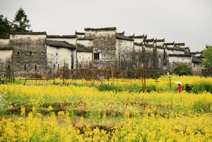Flowers on the outskirts of a small village Wuyuan village architecture, Beijing Hikers Wuyuan Trip, Jiangxi Prov.