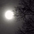 Full moon shines through trees