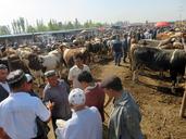 20160823-0828-Silk-Road-Korla-to-Kashgar--(75)