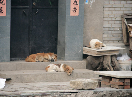Sleeping dogs, Beijing Hikers Ancient Horse Hoofprints hike, 2009-11-07