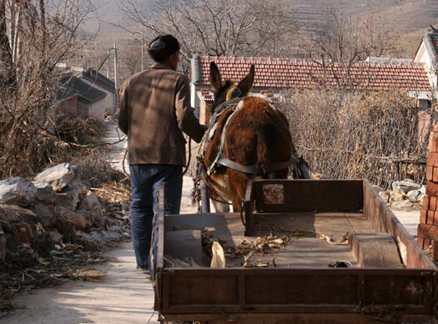 Donkey and cart, Beijing Hikers War Tunnels and Lost Village hike, 2009-12-03