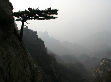 Tree and mist, Beijing Hikers Immortal Valley hike, 2009-12-09