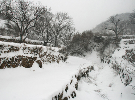 Snow covered terraces, Beijing Hikers Snow hike, 2010-01-03