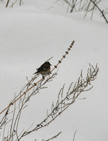 Bird, Beijing Hikers Snow hike, 2010-01-03