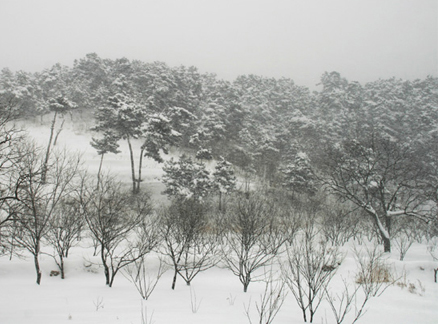Trees, Beijing Hikers Snow hike, 2010-01-03