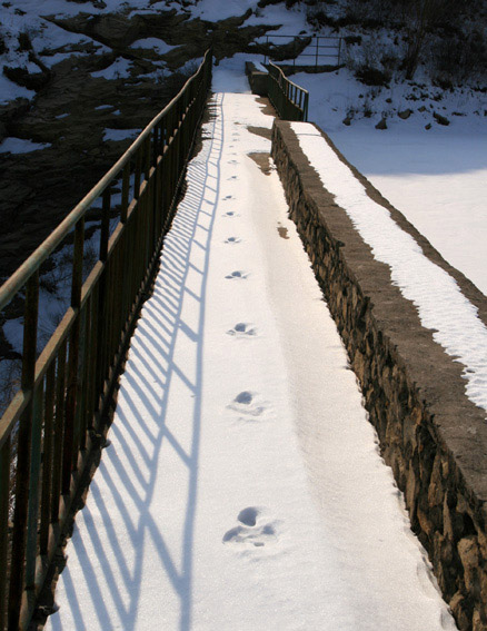 Tracks, Beijing Hikers Longyunshan and White River hike, 2010-01-16