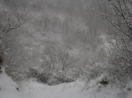 Snow in the trees, Beijing Hikers Snowy Switchback Great Wall hike, 2010-02-06