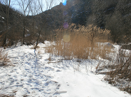 Reeds and snow, Beijing Hikers Intelligence Valley hike, 2010-01-31