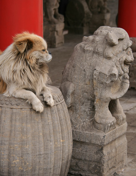 Dog and statue, Beijing Hikers Ancient Walled City of Pingyao trip, 2010/03/19-21