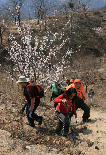 Hill trail through orchard, Beijing Hikers Chestnut Orchard hike, 2010-04-24