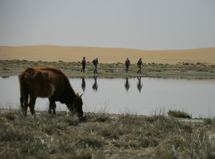 Cow by the lake, Beijing Hikers Alashan Desert Trip, May 1-4, 2010