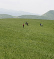 Hikers walking through grasslands