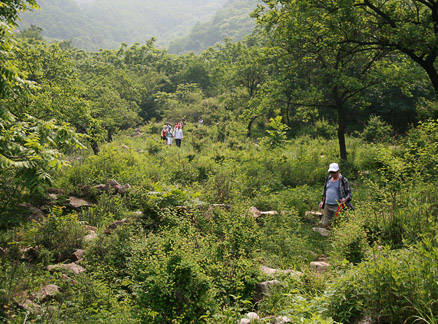 Trees and weeds, Beijing Hikers Great Flood hike, 2010-06-06