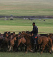 Herdsman and horses