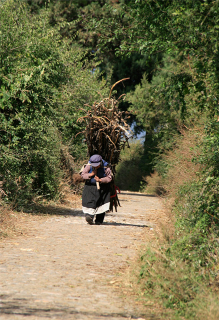 Naxi lady carrying firewood, Beijing Hikers Yunnan scouting, November 2010