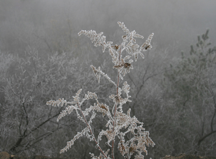 Frost on trees, Beijing Hikers Huanghuacheng to the Walled Village hike, December 1, 2010