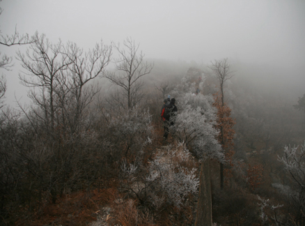 Frost on bushes on the Great Wall, Beijing Hikers Huanghuacheng to the Walled Village hike, December 1, 2010
