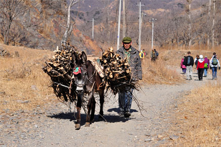 Man and donkey, Beijing Hikers Auspicious Village and Huanghuacheng,March 06, 2011