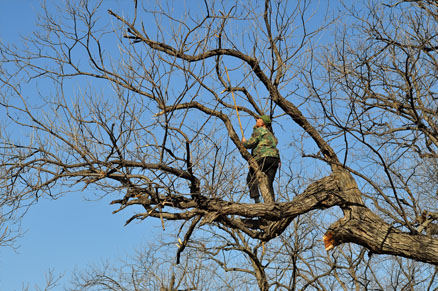 A local pruning his trees, Beijing Hikers Auspicious Village and Huanghuacheng,March 06, 2011