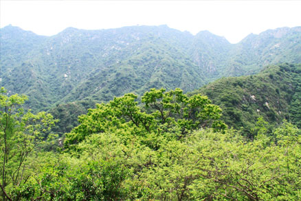 A view of one of the nearby hillsides, Beijing Hikers Mr. Mao's Chestnut Orchard, June05, 2011