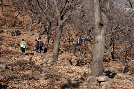 chestnut orchards, Beijing Hikers BigBlackMountain, November20, 2011