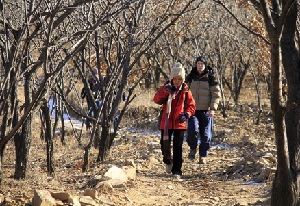 chestnut orchards, Beijing Hikers Gubeikou GreatWall Loop Midweek, November02, 2011
