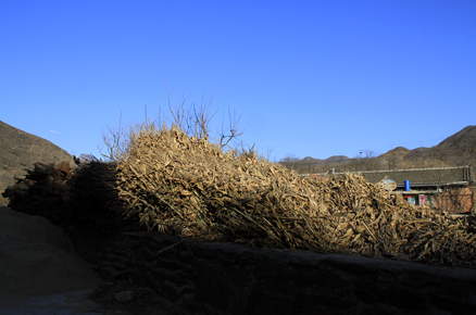 A load of corn stalks, Beijing Hikers Gubeikou GreatWall Loop Midweek, November02, 2011