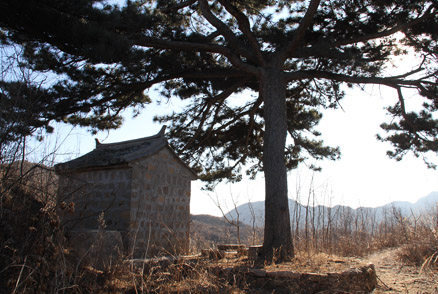 a shrine and an old pine tree, Beijing Hikers Triangle Hike and Silver Pagodas, January22, 2012
