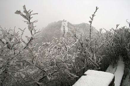 The branches of trees, Beijing Hikers Switchback, March03, 2012