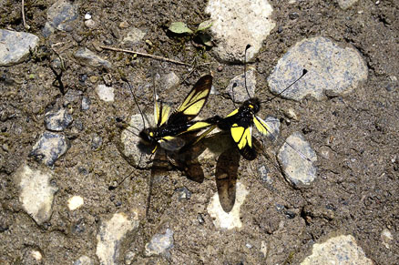 butterflies, Beijing Hikers Full Moon hike, June09, 2012