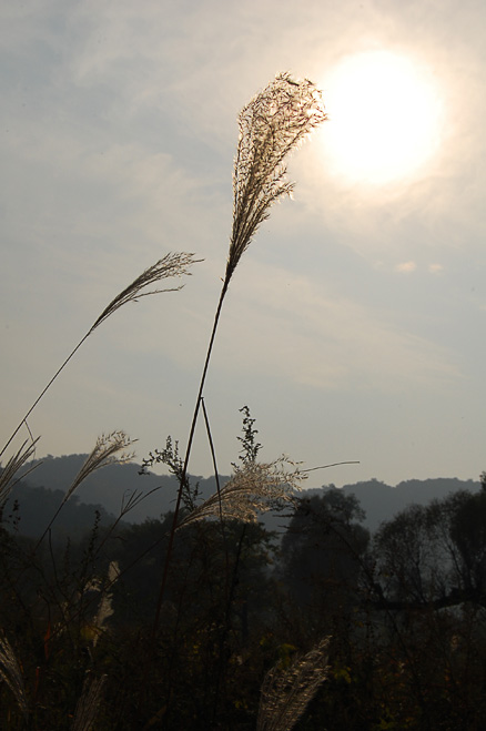 Grass waving in the breeze., Beijing Hikers Longevity Village to Lily Village, October07,2012