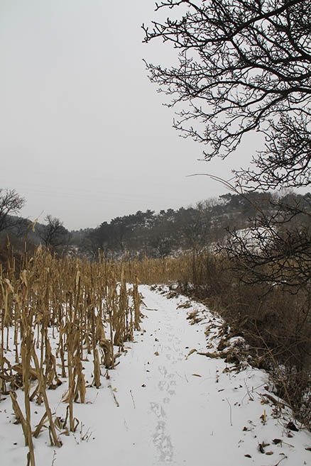 a trail beside cornfields, Beijing Hikers Rolling Hills, Dec16, 2012