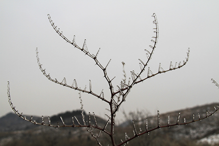 Ice crystals , Beijing Hikers Rolling Hills, Dec16, 2012