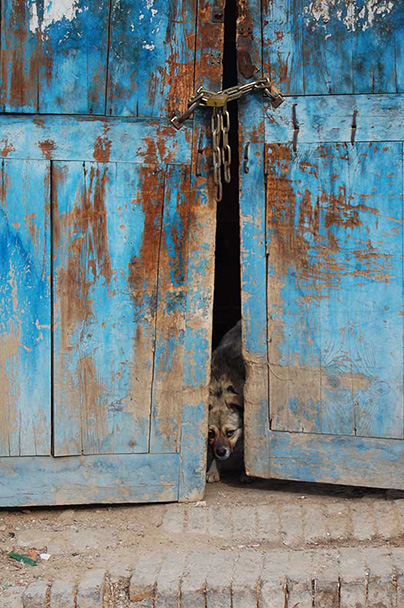 A little homeless dog, Tang Dynasty Dwellings and Yongning Town, 2013/3/2