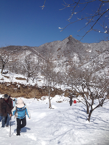 the snow-covered orchard, Beijing Hikers Walled Village to Huanghuacheng Great Wall hike, 2013/03/20