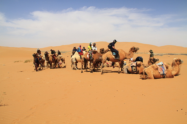 Camel ride begins, Beijing Hikers Desert Trip , 2013/04/28