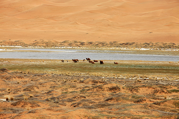 Camel herd in the distance, Beijing Hikers Desert Trip , 2013/04/28