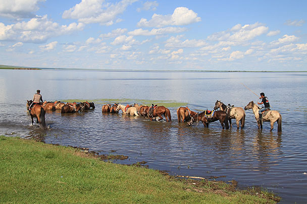 The horses were sent into the lake to cool down,Beijing Hikers Hulunbuir Grasslands 2013/07