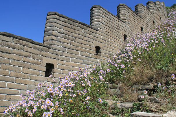 Flowers growing on the Great Wall, Beijing Hiker's Switchback Great Wall hike, 2013/09/01