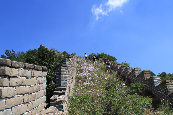 Great Wall  covered in grass and flowers, Beijing Hiker's Switchback Great Wall hike, 2013/09/01