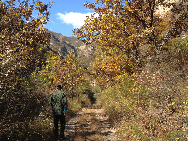 Flat trail through trees, Beijing Hiker's Cypress Wells Canyon hike and Yongning Town visit, 2013/10/19