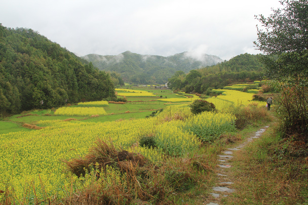A cobblestone path leads through the fields - Wuyuan County, Jiangxi Province, 2014/03