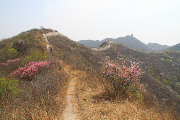 Wild flowers blooming in the early spring - Switchback Great Wall, 2014/4/12