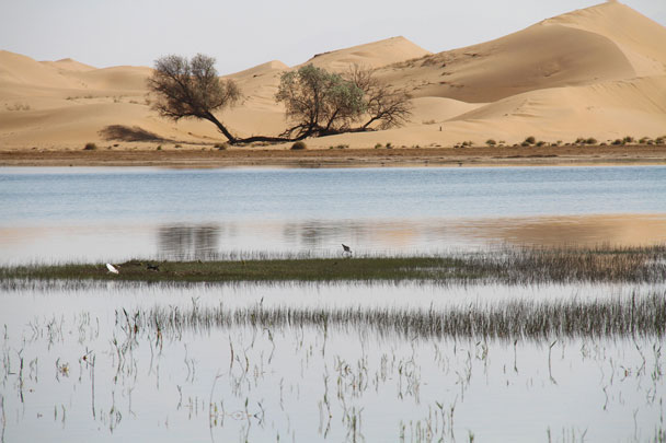 One of the lakes in the Alashan Desert - Alashan Desert, Inner Mongolia, 2014/05
