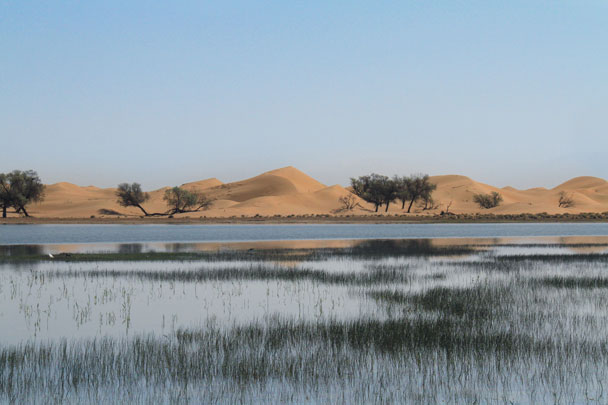 A desert lake surrounded by grass and trees, with waves of dunes in the background - Alashan Desert, Inner Mongolia, 2014/05