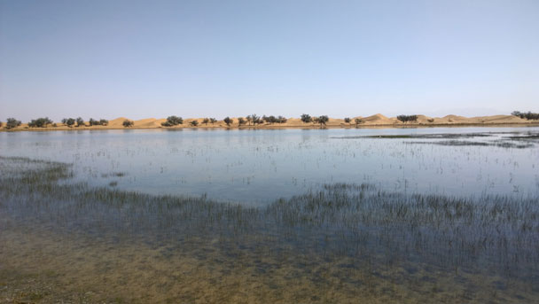 The water in the lake is very clear despite being surrounded by so much sand - Alashan Desert, Inner Mongolia, 2014/05