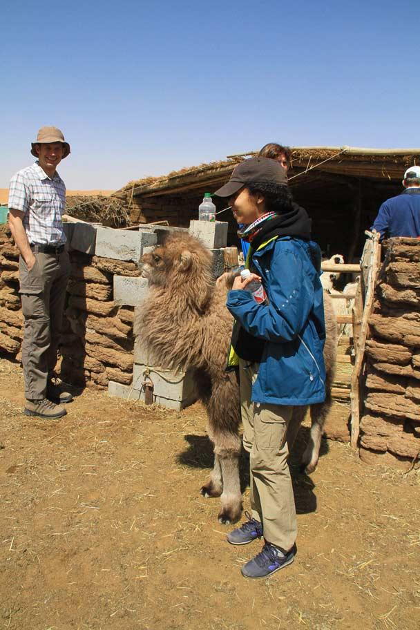 And a baby camel! - Alashan Desert, Inner Mongolia, 2014/05