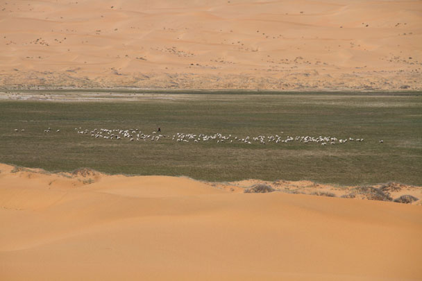 From atop the dunes we spotted a shepherd with a flock of sheep - Alashan Desert, Inner Mongolia, 2014/05