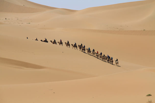 We tried out an alternative mode of transport: camels, the ship of the desert - Alashan Desert, Inner Mongolia, 2014/05